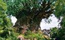 0313-disney-tree_640s.jpg