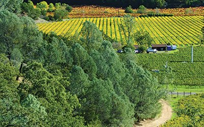 0114_winecountry_400.jpg
