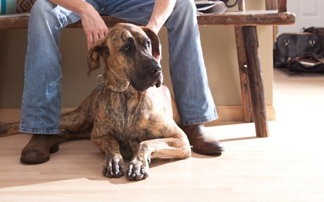 Denton family dog