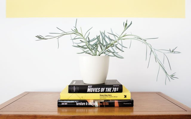 A succulent in the home of Adam Braun and Kim Sauvageot.