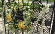 marthas-gardens-06.png