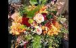 marthas-gardens-01.png