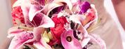 SilksandImages_640x250.png