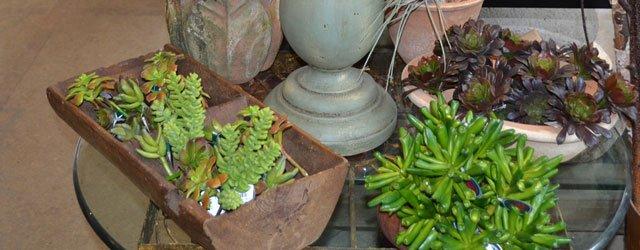 Plants at Twiggs Home & Garden in Minneapolis, Minnesota