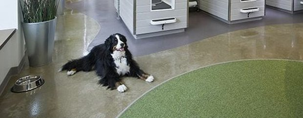 Bernese Mountain Dog laying on the floor of Bubbly Paws
