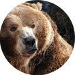 russias-grizzly-coast.jpg