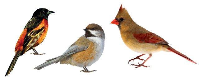 Best Birding Spots in Minnesota