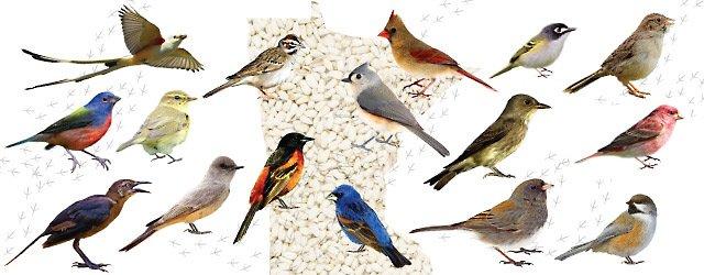Birding in minnesota a guide for the backyard bird for 3 little birds salon