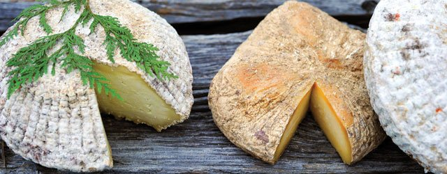 LoveTree Farmstead's Mary Falk makes some of the world's best cheese.