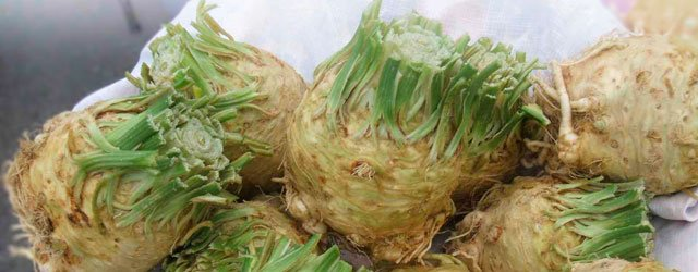 One Great Plate:  Celery Root