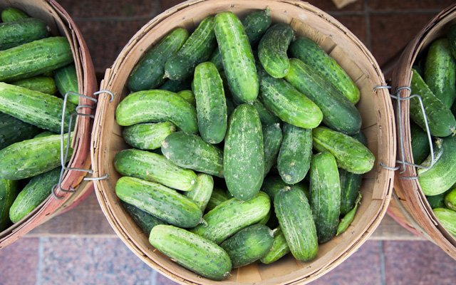 A basket of cucumbers at the Minneapolis farmers' market on Nicollet Mall \ photo by Caitlin Abrams