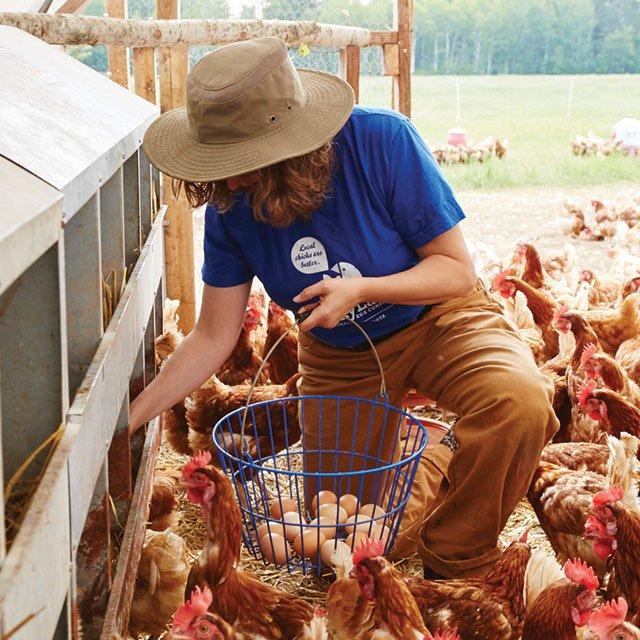Lucie Amundsen gathering eggs on her chicken farm