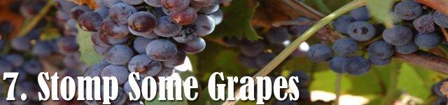 Grapes at Saint Croix Vineyards