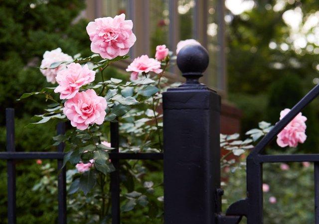 MSP_Garden_Sep_2015-10070.jpg