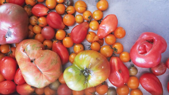 20_02_Everett-and-Underwood_Tomatoes-from-garden.jpg