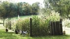 20_05_Everett-and-Underwood_Chickens.jpg
