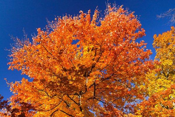 thefeed-autumn-trees_600.jpg
