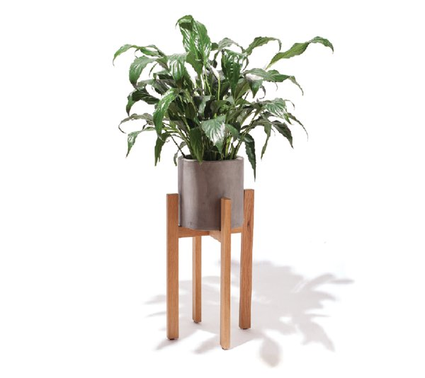 Concrete Standing planter, from West Elm