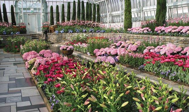 Como Conservatory's spring flower show