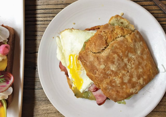 Scone from The Lynhall - Caitlin Abrams