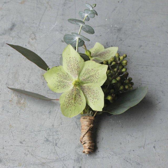 Eucalyptus5.jpg