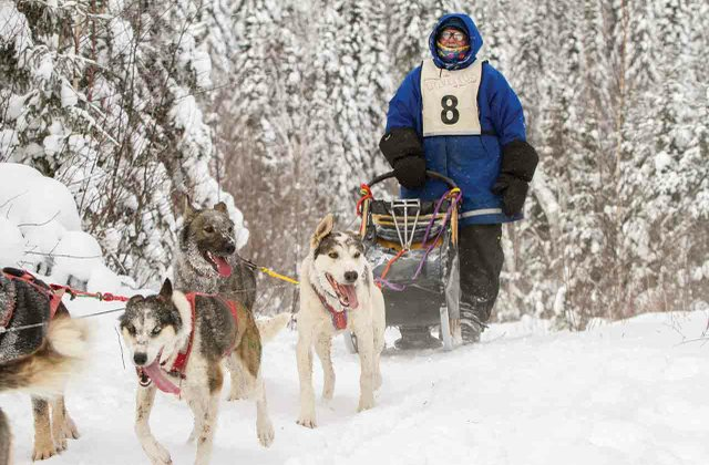Dog sledding on the Gunflint Trail