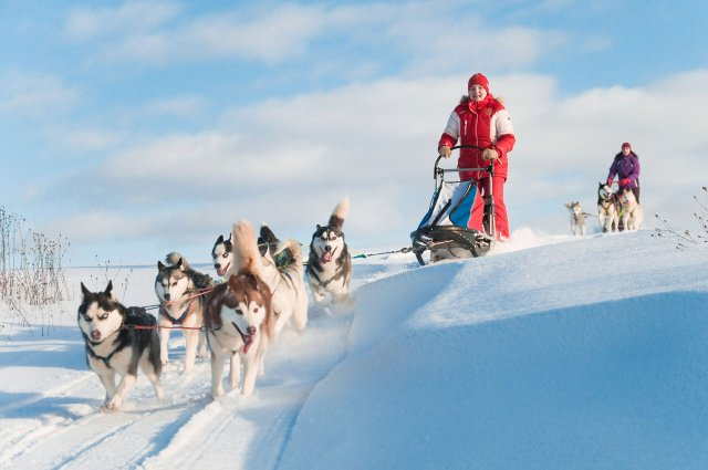 Woman riding on dog sled.