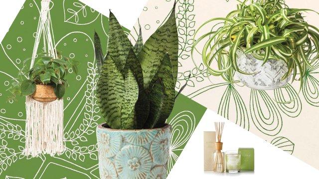 plant-collage.jpg