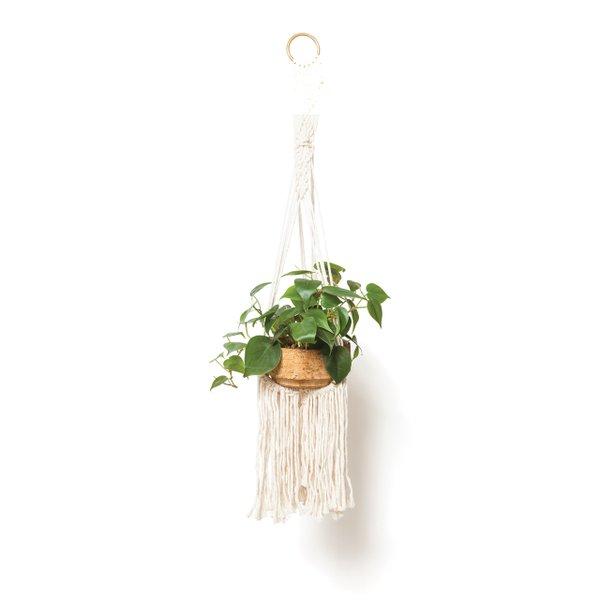 Macrame plant hanger.