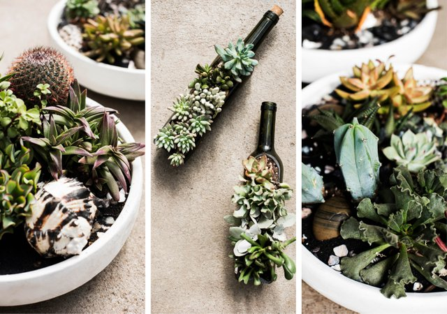 Tabletop planters with succulents