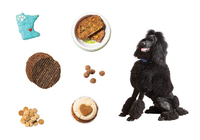 Poodle Blair with dog treats