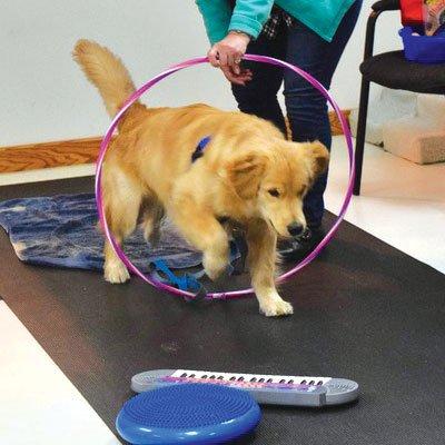 Training a dog on agility course