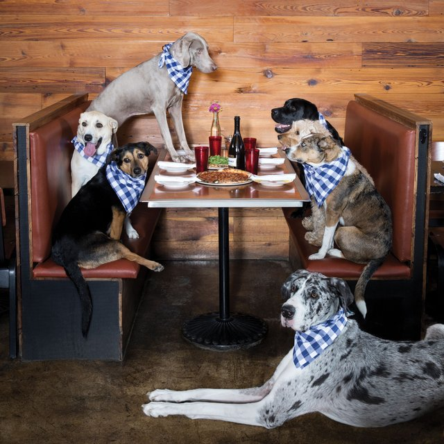 Dog-Friendly Guide to the Twin Cities