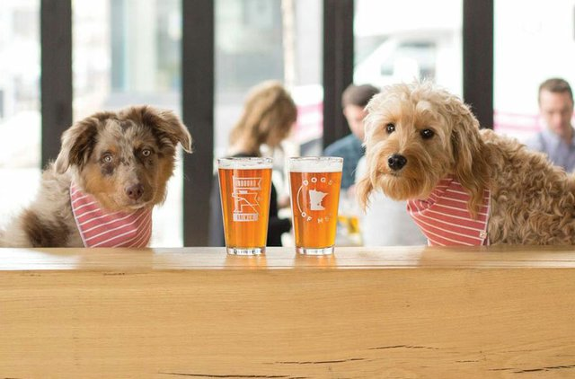 Dogs at bar at Inbound Brewery