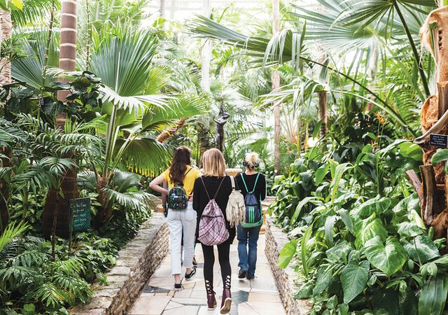 Behind the Scenes at the Como Conservatory in St  Paul