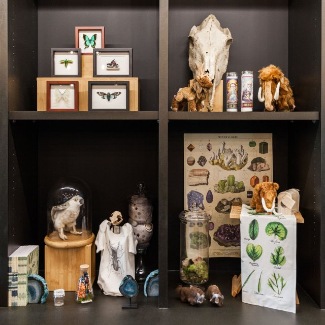 Quirky Home Decor Ideas Inspired By The Bell Museum Mpls St Paul