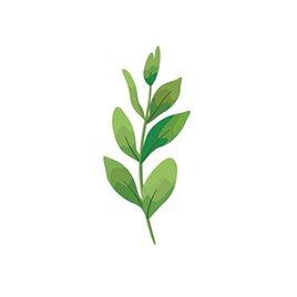 Nagi ferns illustration