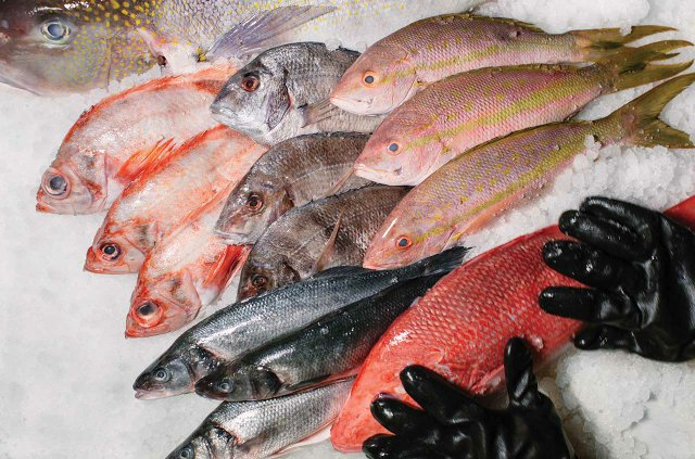 Fish at Fortune Fish and Gourmet