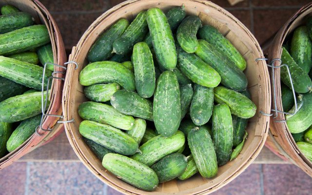 Cucumbers at Nicollet Farmers Market