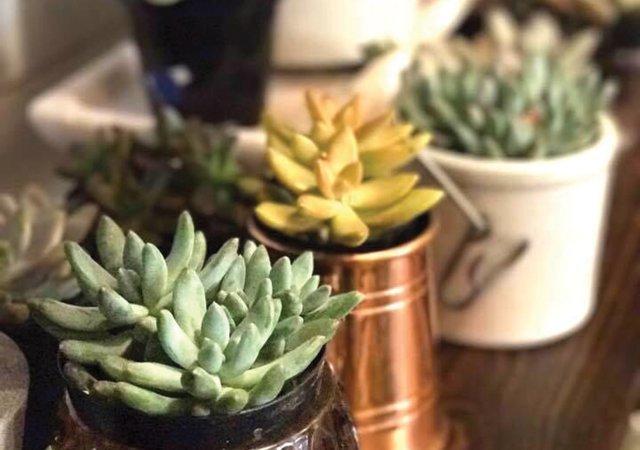 succulentshomeremodel.jpg