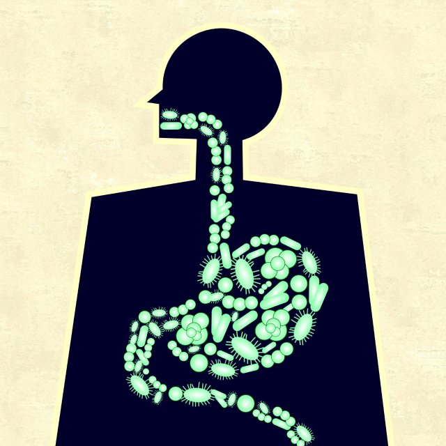 illustration of Microbes in the digestive system