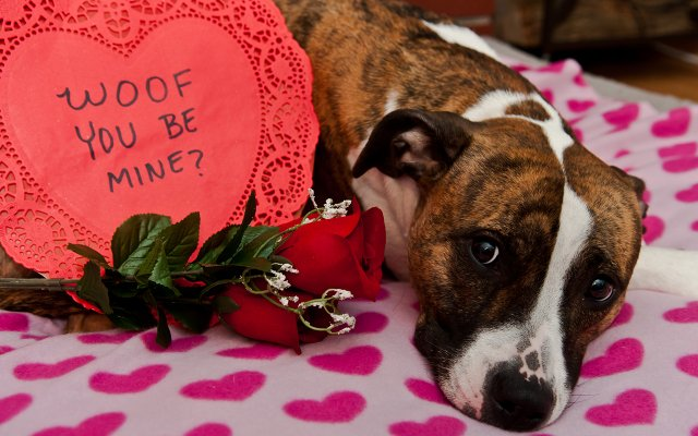 Valentine's Day Puppy