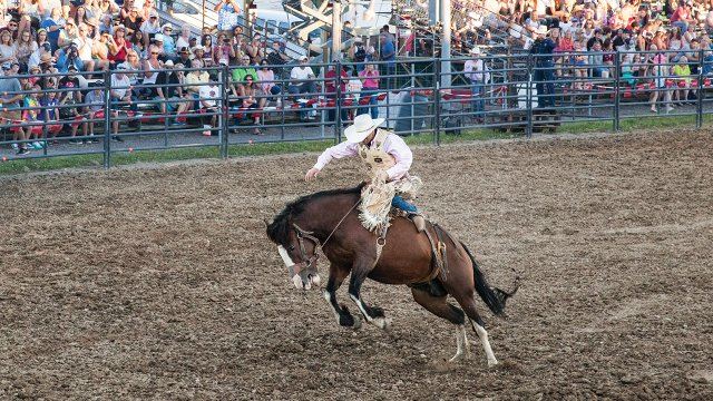 Hamel-Rodeo-and-Bull-Bonanza.jpg