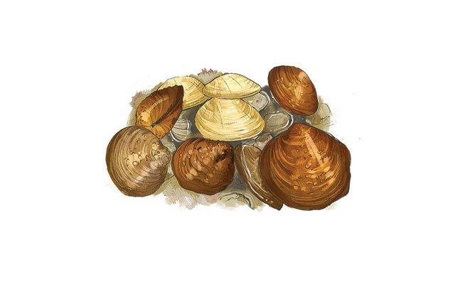 Native Mussels