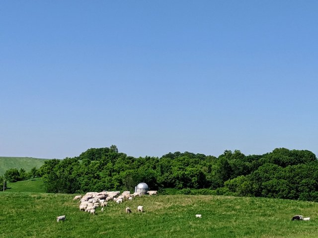 An open field with cows grazing
