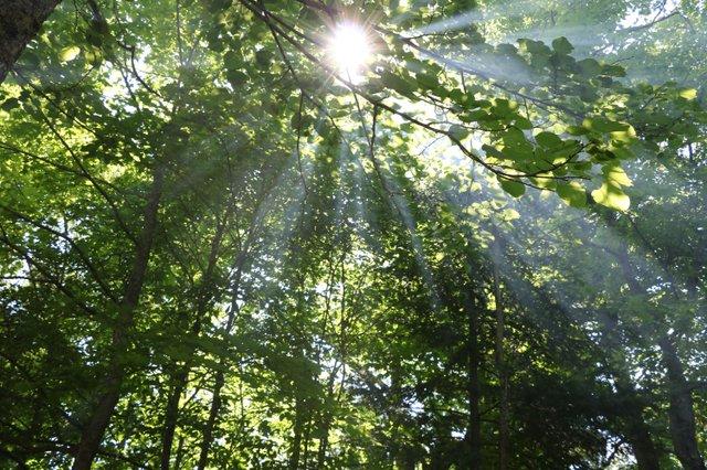 Grand Rapids Area Forest