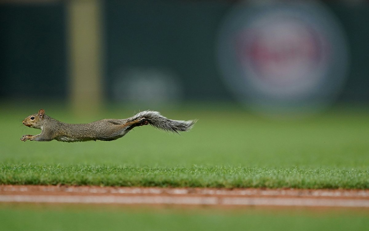 We're Obsessed with the Target Field Squirrel