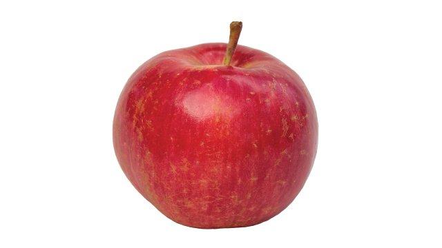 Chestnut Crabapple » 7.2