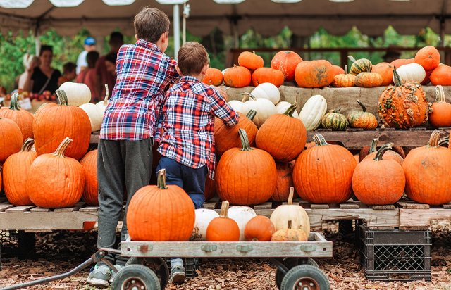 Fall Festivals in the Twin Cities
