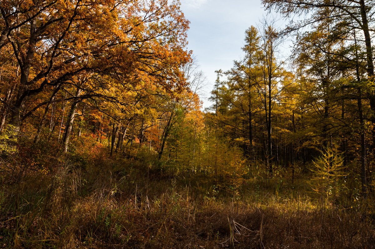 10 Destinations to See Peak Fall Colors in Minnesota